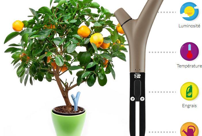 Soigner ses plantes.