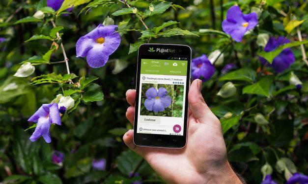 Pl@ntNet, l'application ludique pour identifier les plantes